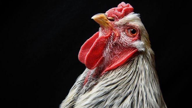 Türkiye Çin'e Tavuk Ayağı Satıyor